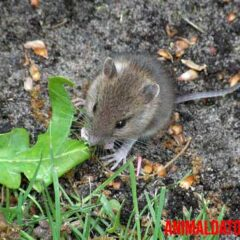 ratones que comen