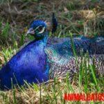 Porque existen animales azules y 5 ejemplos sorprendentes