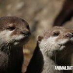 Porque existen animales monógamos en la naturaleza y ejemplos