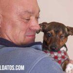 Que es un perro velcro: conducta, características y como prevenirlo