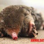 Porque hay animales que viven en el subsuelo bajo tierra