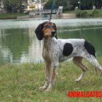 6 razas de perros extintas y motivos de su desaparición