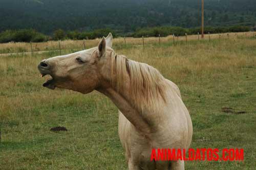 tiña en caballos