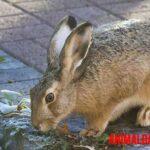 12 alimentos prohibidos para conejos que incluso los pueden envenenar