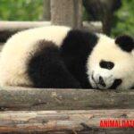 6 ejemplos de animales que abandonan a sus crías al nacer