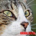 ¿De qué color ven los gatos? Descubre como ven los mininos el mundo