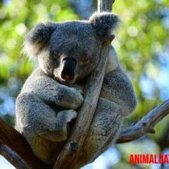 porque en australia hay animales raros