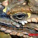 Brumación: conoce como y porque hibernan los anfibios y reptiles
