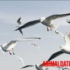porque las gaviotas vuelan en circulos