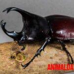 6 tipos de escarabajos con imágenes