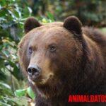 Los 5 animales carnívoros más peligrosos y letales del mundo