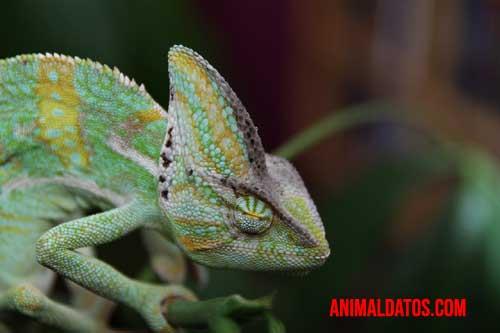 animales que cambian de color