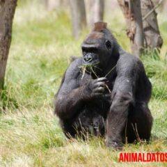 animales que viven en la selva