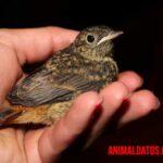 ¿Cómo saber si un pájaro está muriendo? Síntomas y signos visibles