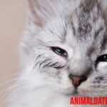 ¿Por qué mi gato tiene los ojos llorosos? Causas y como solucionarlo