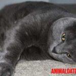 Síntomas de lombrices en gatos, así como eliminar y prevenir