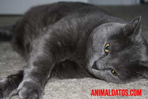lombrices en gatos