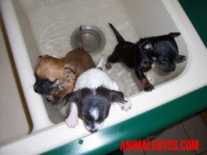 se puede bañar a un cachorro sin vacunas