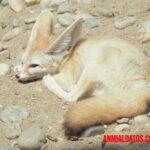 Características de los animales del desierto que les permiten sobrevivir