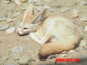 caracteristicas de los animales del desierto