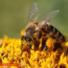 como respiran las abejas