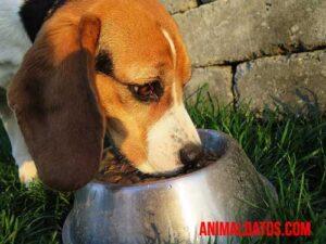 porque no debería alimentar a mi perro con comida humana