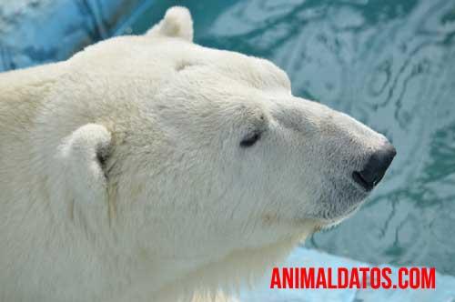 animales del clima frio