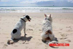 como hacer que dos perros se lleven bien