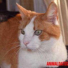 es cierto que los gatos causan esterilidad