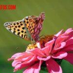 Que comen las mariposas comunes, monarcas, nocturnas, negras y otras más