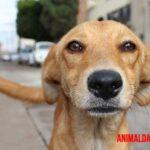 Tipos de maltrato animal más comunes y sus características. ¿Cómo detenerlo?