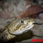 5 animales que reptan o se arrastran: ejemplos y fotos