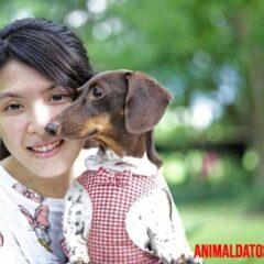 animal es un amigo