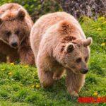 Animales plantígrados y ungulados: nombres y ejemplos