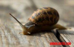porque los caracoles son lentos