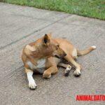 Alopecia en perros: Síntomas, causas y tratamientos sugeridos