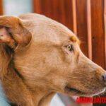 Como se comunican los perros entre ellos mismos, con ejemplos