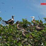 Como ahuyentar pájaros del techo, huerta y otros sitios, sin lastimarlos