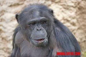 animales mas inteligentes