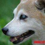 Como cuidar a un perro ciego y sordo, ideas para hacerles la vida mejor