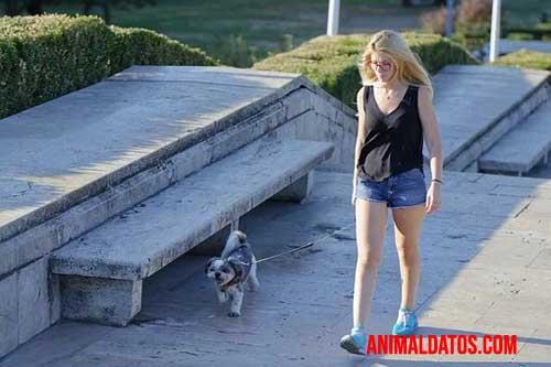 consecuencias de no sacar a pasear a tu perro