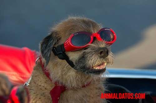 síndrome postvacacional en perros