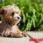Todo sobre el calcio en perros: su importancia, alimentos recomendados y problemas por deficiencia