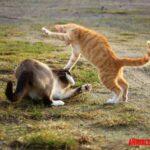 Como hacer que dos gatos se lleven bien: tips para presentarlos e introducirlos