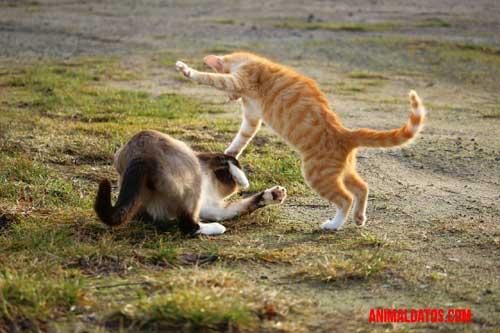 como hacer que dos gatos se lleven bien