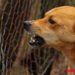 ¿Cómo saber si mi perro tiene rabia? Síntomas y signos visibles