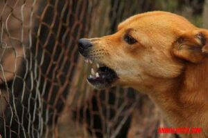 como saber si mi perro tiene rabia