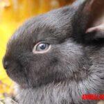 Explicación de como ven los conejos el mundo que lo rodea