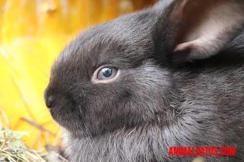 como ven los conejos