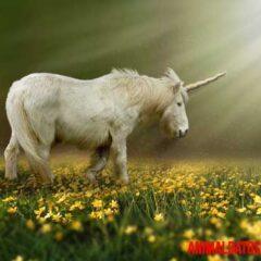 existen los unicornios en la vida real